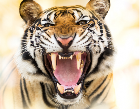 3 PR Lessons from The Tiger King to Help Your Business ROAR